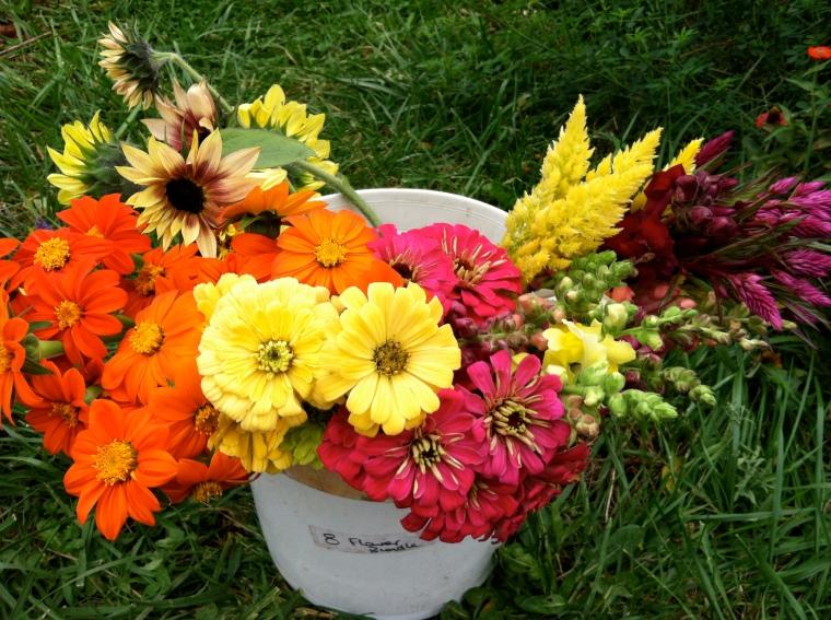 october flowers